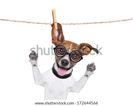 crazy silly dog with funny glasses hanging on a clothes line - stock photo