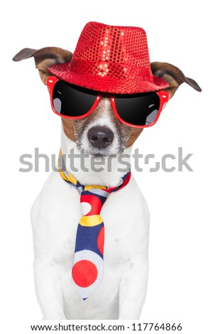 crazy silly funny dog hat glasses  and tie - stock photo