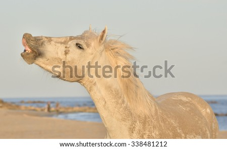 Crazy white horse funny portrait on natural background. Close up  - stock photo