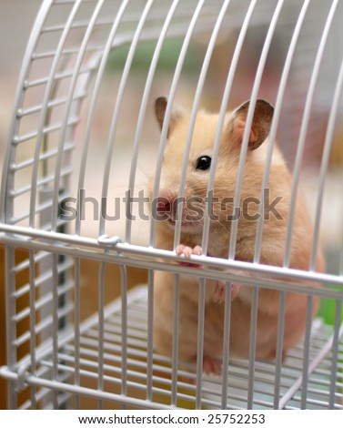 cream hamster in a cage - stock photo