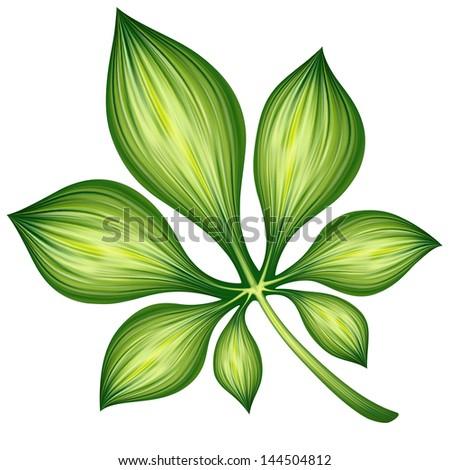 creative foliage, illustration of green leaf isolated on white background - stock photo