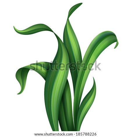 creative foliage, illustration of green leaves and grass isolated on white background - stock photo