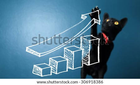 Creative photos of business cats presentations with graphs touch screen with a dark blue background.