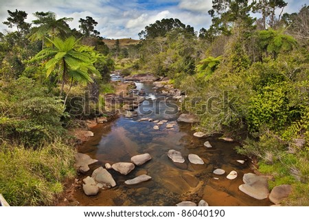 creek and fern trees in tropical tablelands Queensland Australia unspoilt pristine and pure wilderness beautiful wild nature