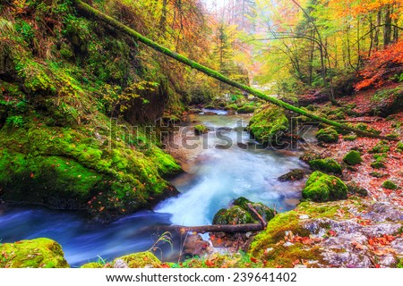 Creek deep in mountain forest in Transylvania,Romania - stock photo
