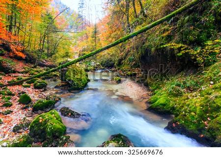 Creek deep in mountain forest in Transylvania,Romania - stock photo