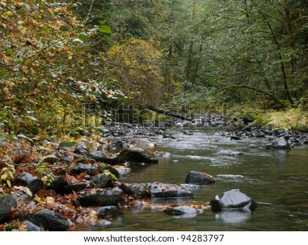 Creek in forest in fall