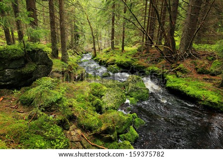 Creek in the beautiful Wilderness, the summer Mountains Sumava in southern Czech