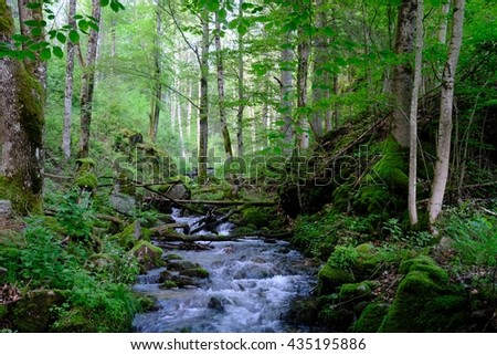 creek in the Black Forest Mountains