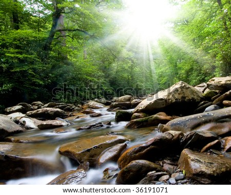 creek in the forest - stock photo