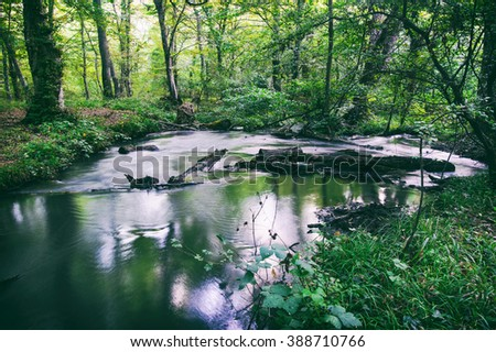 Creek in the wilderness forest. Toned photo - stock photo