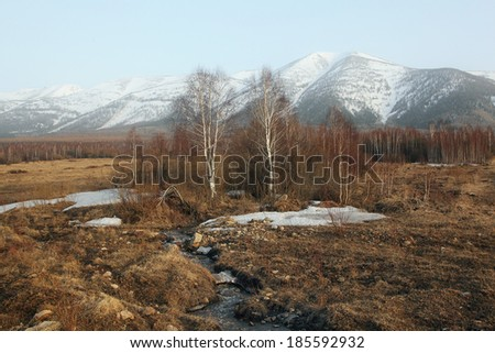 creek is current from the Altai mountains in spring - stock photo