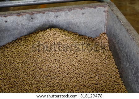 Creep-feed for piglet in pig farm  - stock photo