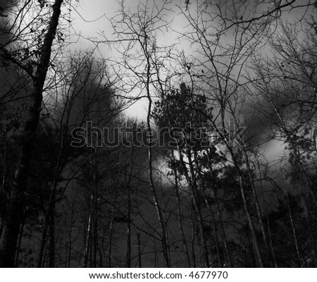 Creepy dark haunted forest