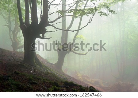 creepy forest with scary trees and fog - stock photo
