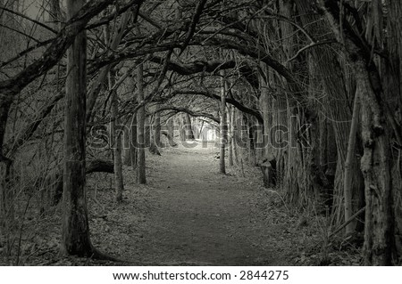 Creepy forest with trees over hanging a path - stock photo