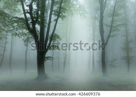 Creepy low fog into the forest - stock photo