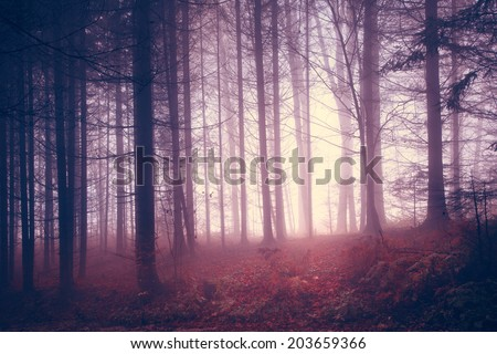 Creepy red saturated vintage forest trees. Color filter and vintage filter effect used. - stock photo