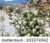 Creosote bush in Red Rock Canyon, Nevada - stock photo