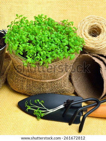 Cress salad on the flower bed with rake, shovel, peat cups on sacking background - stock photo