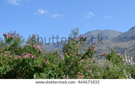Cretan Landscape with Mountains and Oleander Bushes