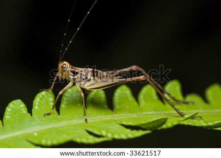 cricket on green leaf