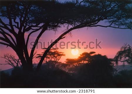 Crimson African sunrise with thorn tree - stock photo