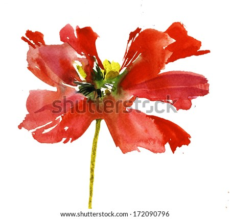 Crimson poppy background - stock photo