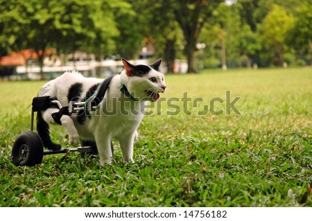 Cripple Cat In Wheelchair - stock photo