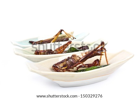 Crispy fried insects amazing menu - stock photo