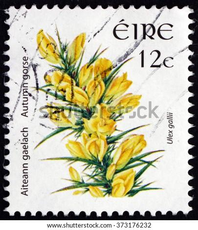 CROATIA ZAGREB, 30 JANUARY 2016: a stamp printed in Ireland shows Autumn Gorse, Ulex Gallii, Evergreen Shrub, circa 2006 - stock photo