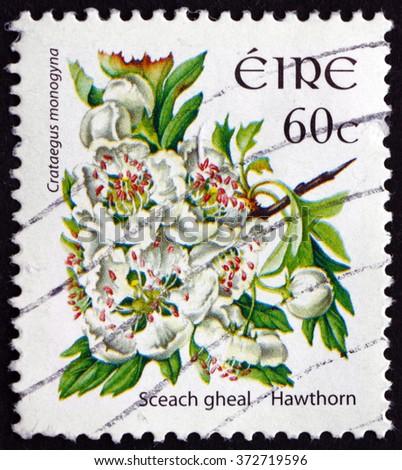 CROATIA ZAGREB, 30 JANUARY 2016: a stamp printed in Ireland shows Hawthorn, Crataegus Monogyna, Shrub, circa 2004 - stock photo
