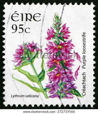 CROATIA ZAGREB, 30 JANUARY 2016: a stamp printed in Ireland shows Purple Loosestrife, Lythrum Salicaria, Flowering Plant, circa 2007 - stock photo