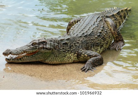 Crocodile Stock Images Royalty Free Images Amp Vectors