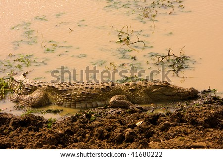 Crocodile basking in the sun - stock photo