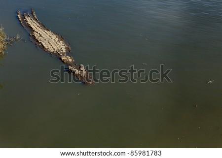 Crocodile du Nil dans l'eau au soleil - stock photo