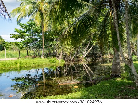 Crocodile Farm - Views around the Caribbean Island of Cuba