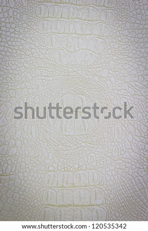 Crocodile leather with white color - stock photo