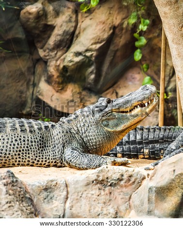 Crocodile lying at the zoo - stock photo