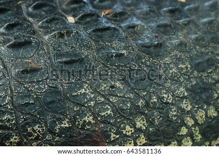 crocodile skin , alligator skin