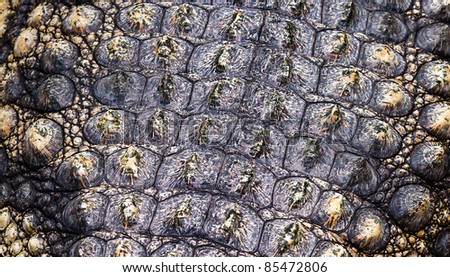 Crocodile skin background or texture