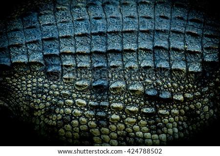Crocodile skin texture is strange background.  - stock photo