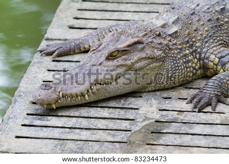 crocodile with open mouth resting