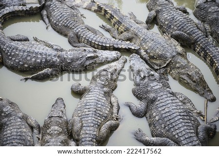 Crocodiles in the zoo of Cambodia - stock photo