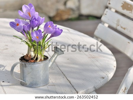 crocus in a little watering can placed on white table on terrace - stock photo