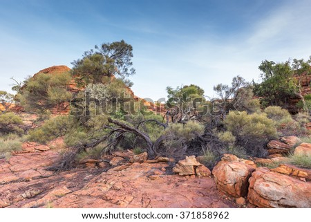 Crooked Tree at Kings Canyon, Watarrka National Park, Northern Territory, Australia - stock photo