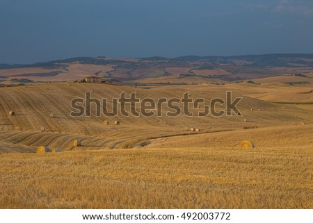 Crop fields in Tuscany