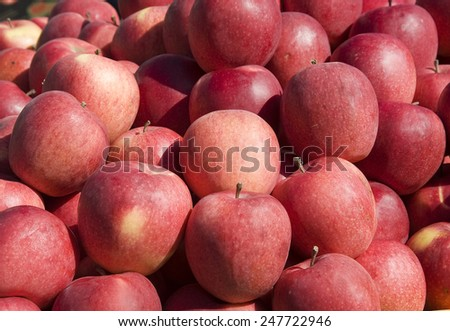 Crop of beautiful, red apples. - stock photo