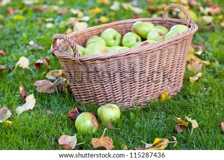 Crop of green and yellow apples in basket