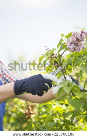 Cropped image of gardener pruning branches at plant nursery - stock photo